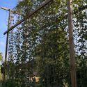 svetelny-koren-pestovanie-bedna-06